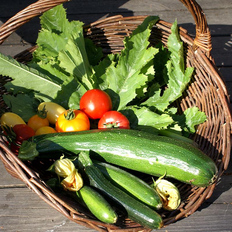 Korg med grönsaker, tomat, squash, sallad
