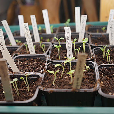 Växtetiketter och plantskyltar