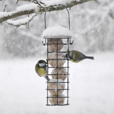 Fågelbord och fågelmatare