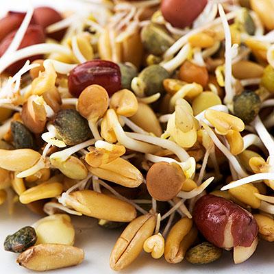 Specialprodukter för groddning och odling av småblad