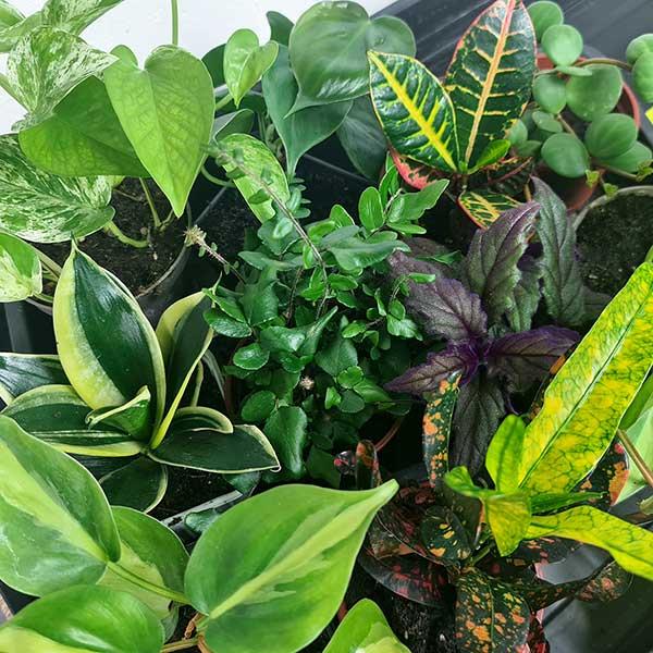 Gröna växter i kruka