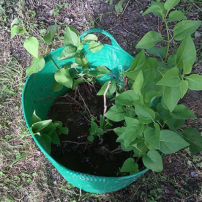 Hinkar, behållare och korgar för trädgården