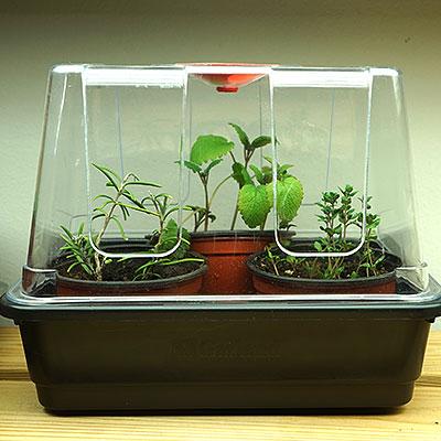 Miniväxthus och odlingslådor med lock