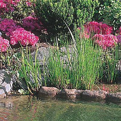 Produkter för trädgårdsdammar