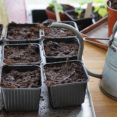Planteringskrukor för småplantor och omplantering