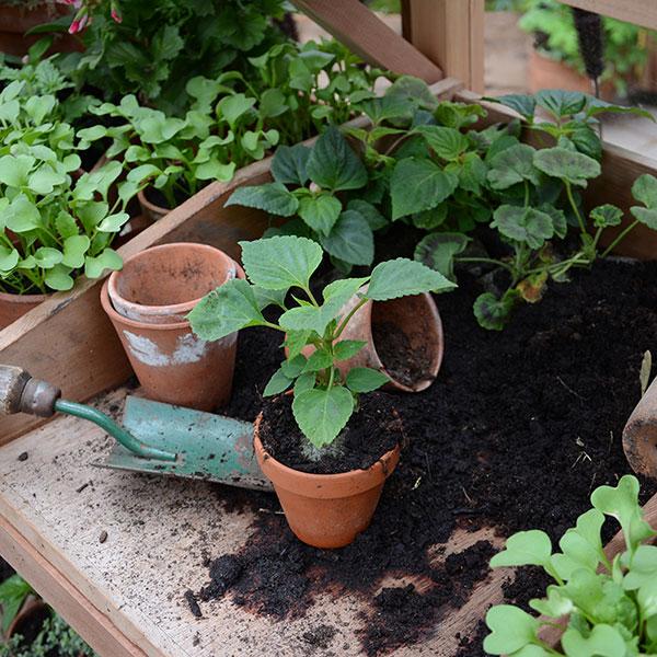 Uppskolning av pluggplanta