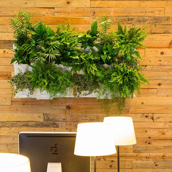 Odling av gröna växter i Minigarden väggmodul