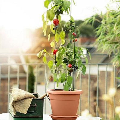 Växtstöd & spaljéer odling på balkong