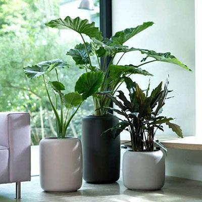 Ytterkrukor inomhus och utomhus
