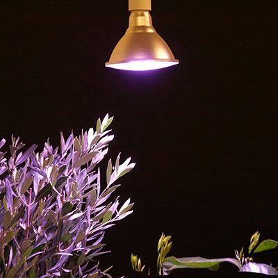 Växtlampa för belysning av växter som övervintrar inomhus