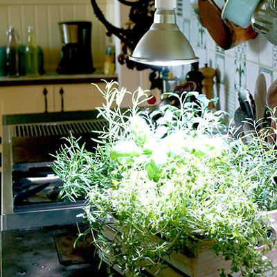Växtlampor för odling inomhus