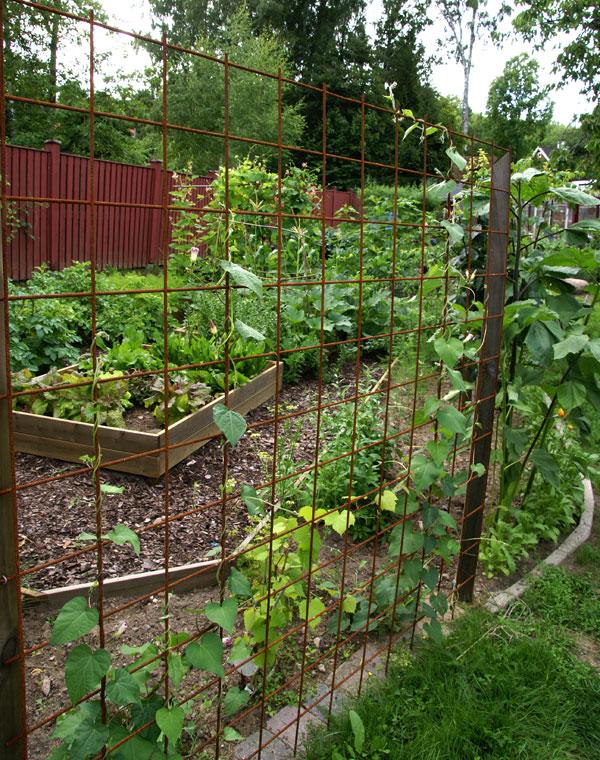 Optimalt pH för odling av olika växter