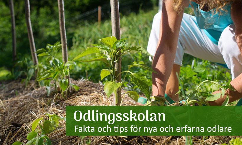 Odlingsskolan för nya och erfarna odlare