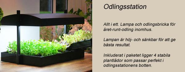 odlingsstation - inomhusodling med växtbelysning