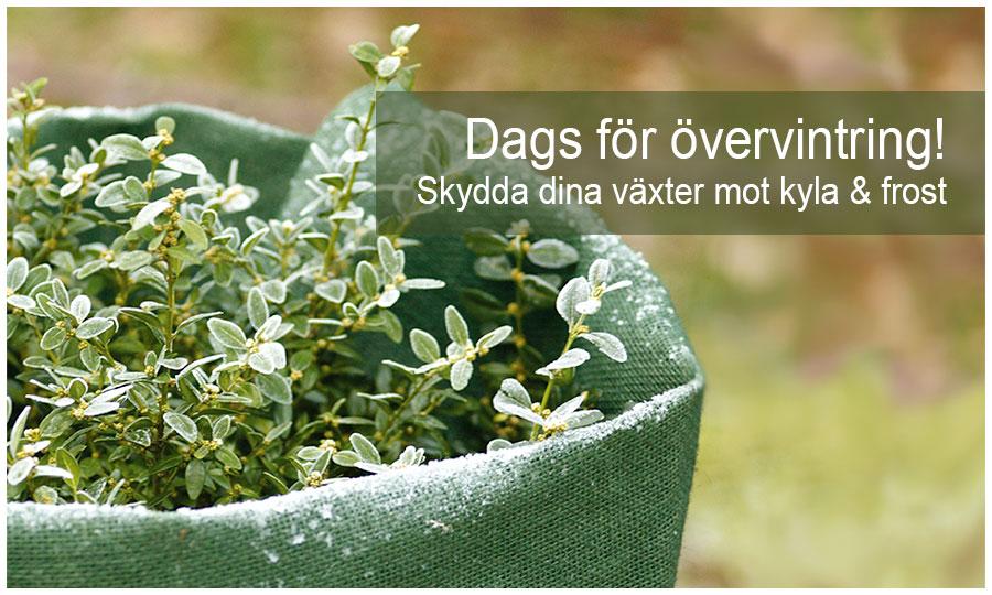 Övervintra växter och skydda mot kyla