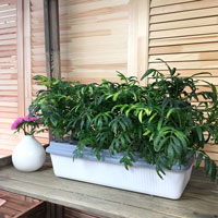 Hydroponisk odling av blomväxter i Skördis