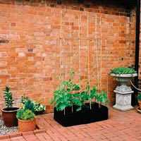 Mini Grow Bed med växtstödsram-Odlingslåda med växttödsram