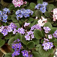 African Violet jord, 2 liter,