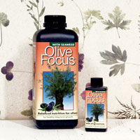 Olivnäring - Olive Focus, 300 ml ,