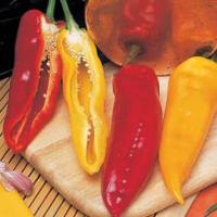 Paprika PEPPER (Sweet) Corno di Toro Mixed-Frö till Paprika
