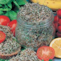 Groddar SPROUTING SEEDS Alfalfa-Frö till Groddar