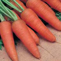 Morot CARROT Royal Chantenay 3-Frö till Morot