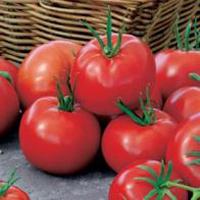 Tomat TOMATO Geo 12 F1-Frö till Tomat