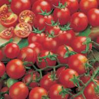 Tomat ORG TOMATO Gardeners Delight-Frö till Tomat