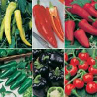 chili-paprikablandning PEPPER HOT & SWEET COLLECTION-Frö till chili-paprikablandning
