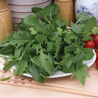 Sallad SP MIXED LEAVES Oriental-Frö till Sallad mixed leaves