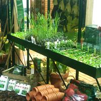 Såbord med kant 217 x 42 cm, lackat-Såbord med kant för montering i växthus, lackat