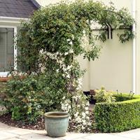 Växtportal för vägg, 150-Växtportal i smide för väggmontering 150 cm bred
