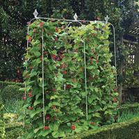 Elegance växtstöd, Runner Bean Frame, Smidesstöd för klängäxter i trädgården
