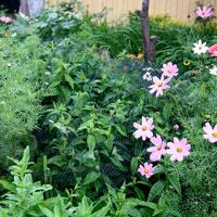 Skyddsnät för växter och dammar.
