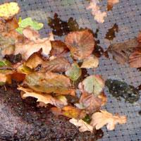 Skyddsnät för att förhindra bl.a löv och djur i damm.