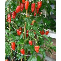 Twister - utdragbart växtstöd 3-pack, Växtstöd för tomater och klängande växter