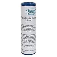 Förpackning med rovkvalster Hypoaspis