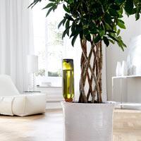 Automatbevattning av krukväxter med vinflaska
