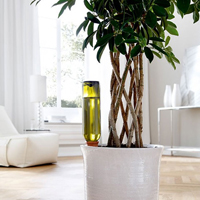 Hydro Wine - automatbevattning-Automatbevattning av krukväxter med vinflaska