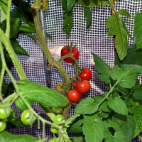 Patioflora 200 växthus/övervintringshus,