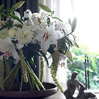 Asiatisk lilja vit 'Casa Blanca'