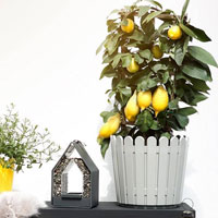 Lantlig blomkruka i staket-design