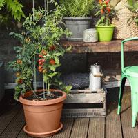 Plantclips för växtstöd och spaljer