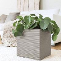 Casa Cosy Cube, kubformad automatvattnande kruka 30x30 cm