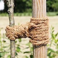 Kokosrep för uppbindning av träd