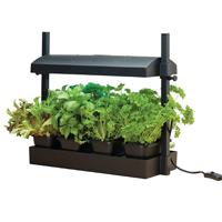Liten odlingsstation, svart-Micro Growlight Garden