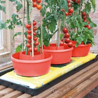 Plantkrage 3-pack - Röd,