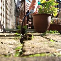 Cultimate - ogräsrensare, Cultimate rensar ogräs mellan plattor i trädgården