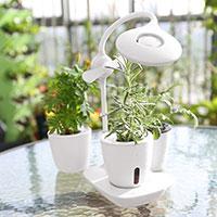 Växtlampa för små krukväxter