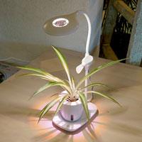 Växtlampa med hydroponisk kruka